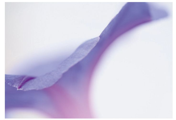 purple, close up, blurred, ANGLE