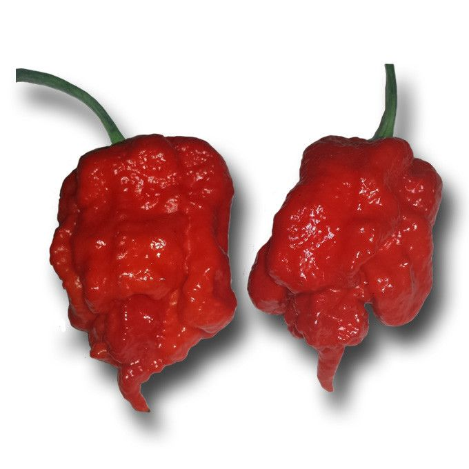 HOTTEST PEPPERS! When you eat it your ears will pop, your body will tingle and everything will feel numb! Over 2,000,000 Scoville Heat Units This Carolina Reaper is an absolutely amazing pepper.