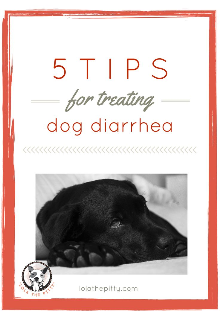 Health saving tips for treating dog with diarrhea.