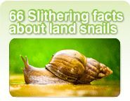 66 African Land snail facts