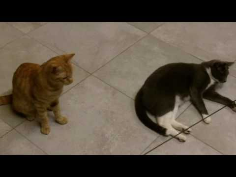 Cat Video: Honda, Pippetto, Bi e il gioco del bozzolo! | Granny's House