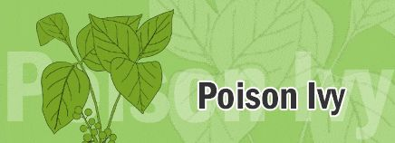 Do your kiddos play in wooded areas? Do they know what posion ivy looks like? More importantly, do YOU know what to do when a reaction occurs?