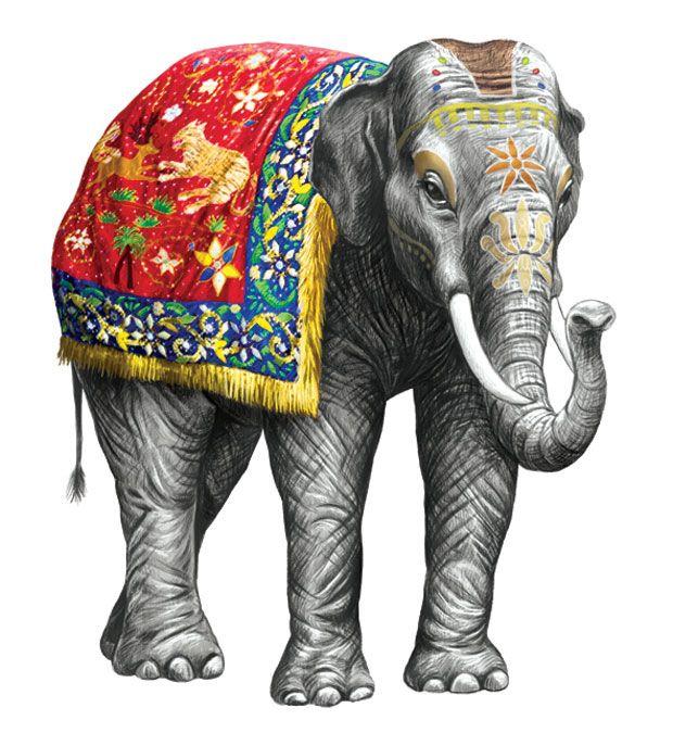 elefante_620