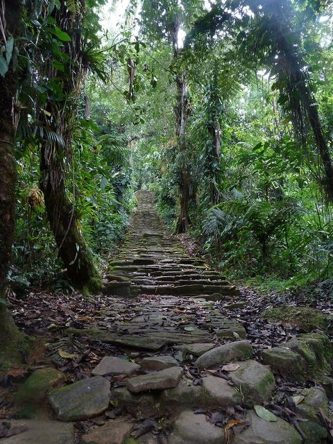 Jungle stairs to Ciudad Perdida, Colombia (by videsent).