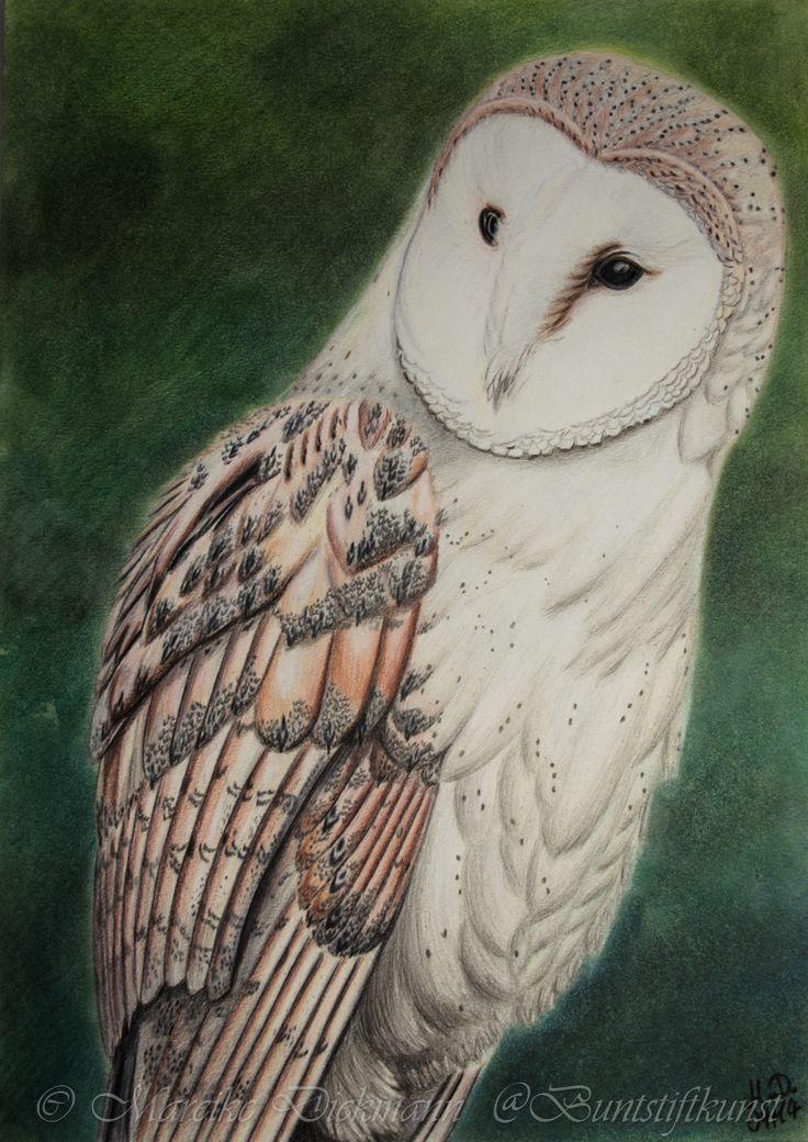 Barn Owl Drawing In Colored Pencil Schleiereule Zeichnung Mit Buntstiften