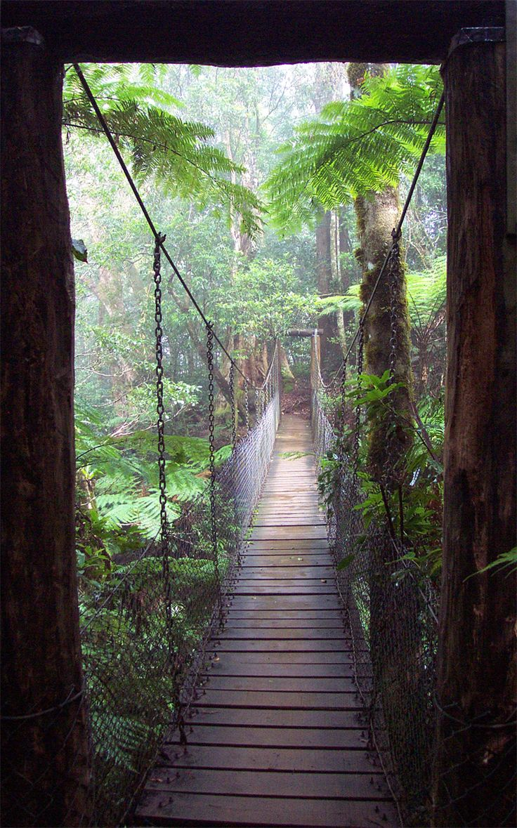 Bridge from Rainforest Fog by arendor at