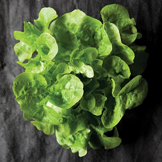 Greens Glossary of 14 types of lettuce (and other spring greens), including romaine, mache, and bibb.: Spring Green, Growing Lettuce, Green Glossari, 14 Types, Photo Glossari, Lettuce Glossari, Includ Romaine, Green Plants, Plants Gardens
