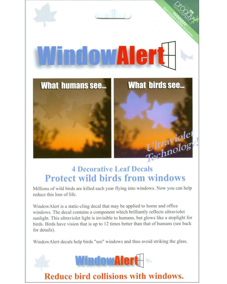 Stop Birds From Flying Into Your Windows With UV Decals - Window stickers to deter birdsstickers to prevent birds flying into windows popular bird