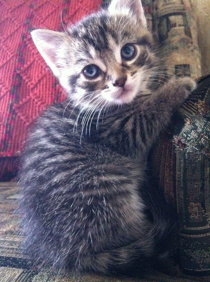 My little kitty:)