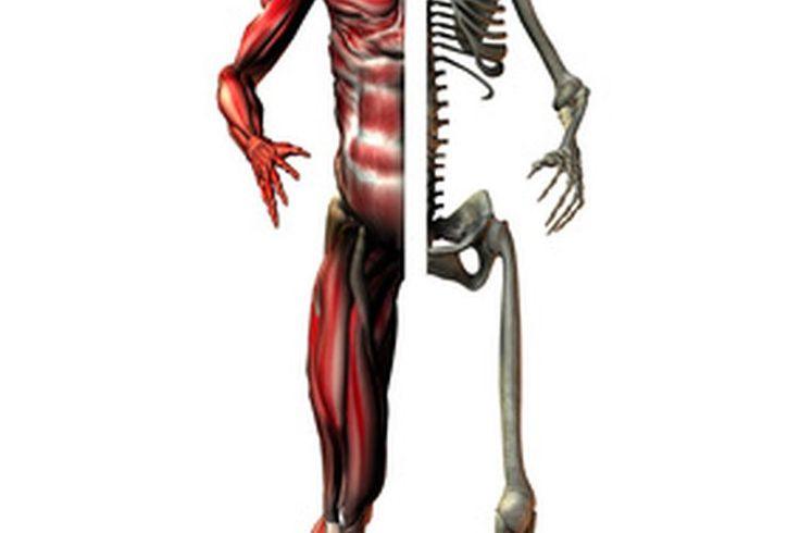 Cresta de gallo para el dolor de rodilla | Muy Fitness