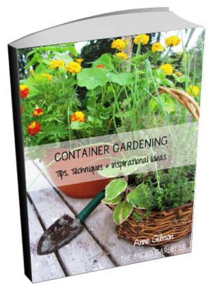 113 best images about creative container gardens on pinterest - Container gardening basics ...