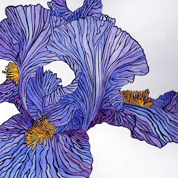 Bearded iris, linocut print in hand coloured variable limited edition