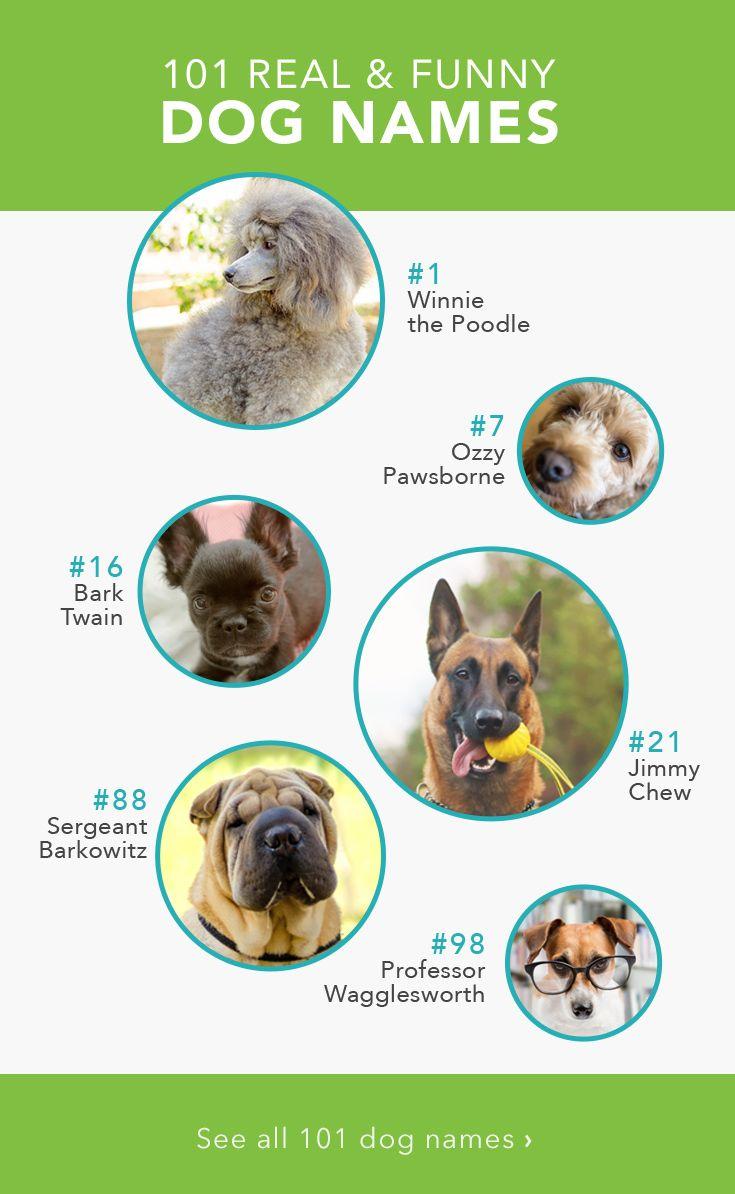 funny dog names - 735×1194