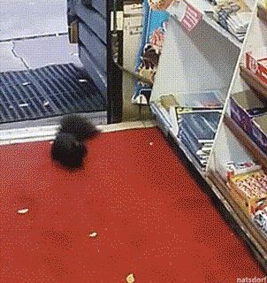 Squirrel repeatedly shoplifts candy bars. [full video]