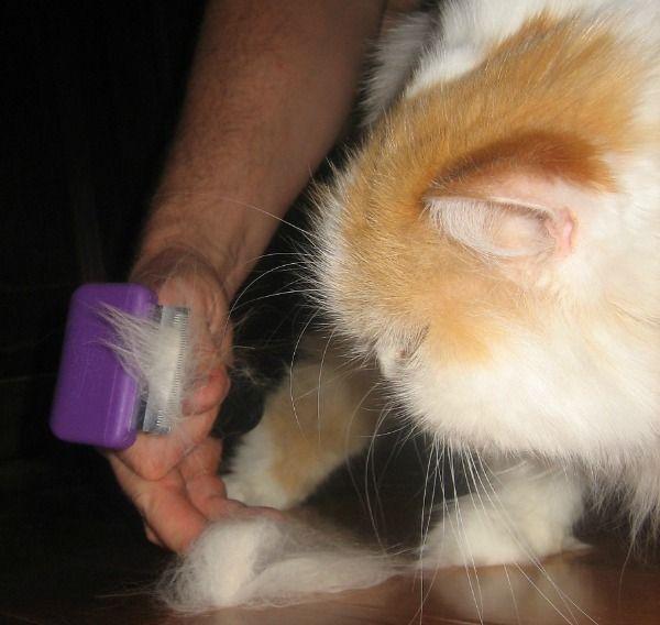 Persian cat grooming kit