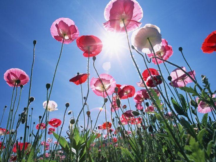 Ecco alcuni dei fiori primaverili più belli e colorati che possono decorare con originalità i giardini.