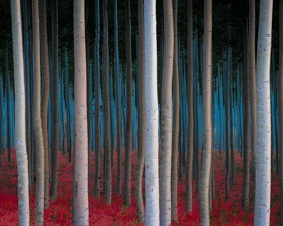 Autumn Photography, Landscape Photograph Trees Halloween