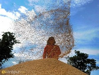 Harvesting Time!