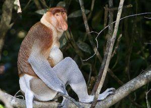 Top 5 Ecotourism Attractions In Sabah Borneo, including Kinabalu Park, Sabah Tea Garden, Sepilok Orangutan Rehabilitation Centre & more.