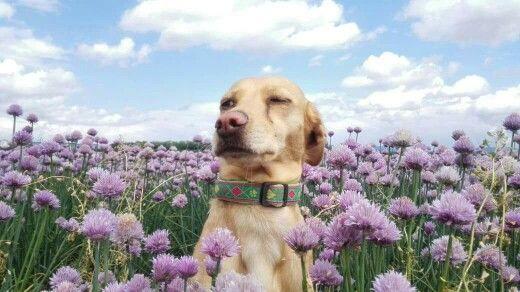 Emma auf der Blumenwiese.