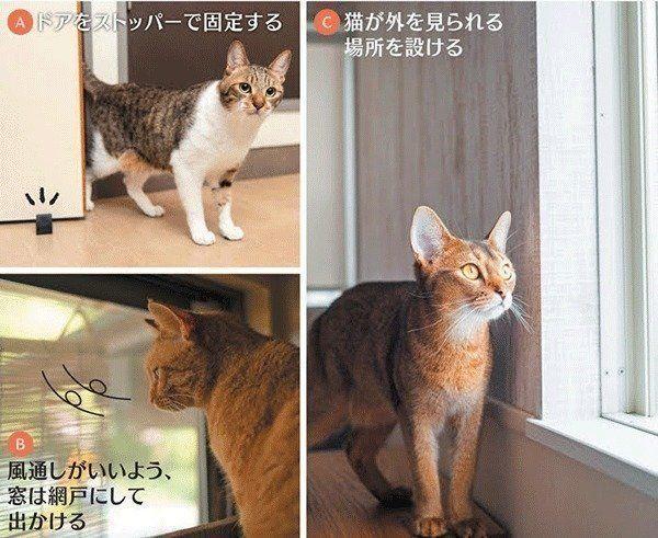 猫クイズ 猫の留守番中の室内環境 間違っているのはどれ ねこのき