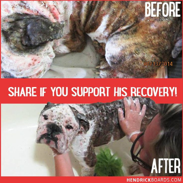 **UPDATE** Remember Hawk? Suffering from one of the worst