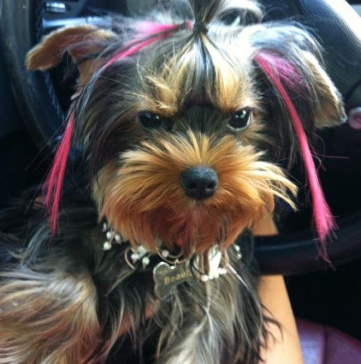 Ελληνίδα παρουσιάστρια έβαλε στο σκύλο της εξτένσιον...(Photos)
