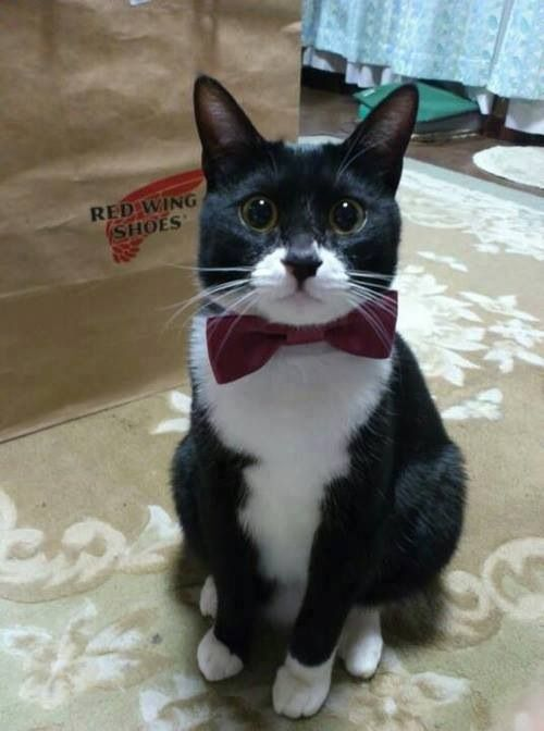 Mr Tux Cat #patrickmartin