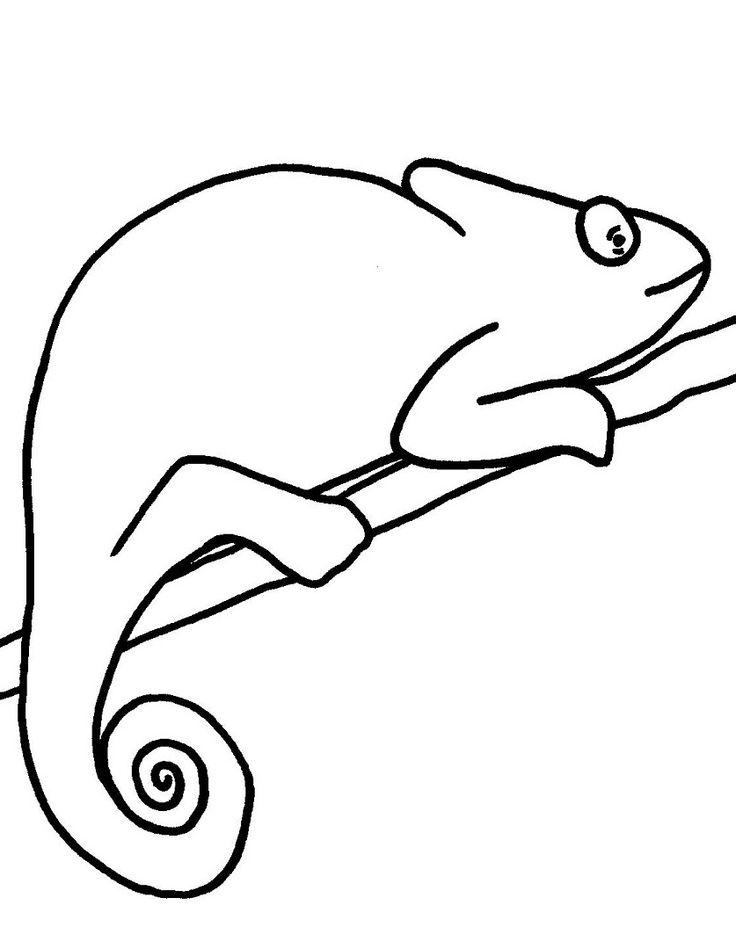 Reptiles Cute Chameleon