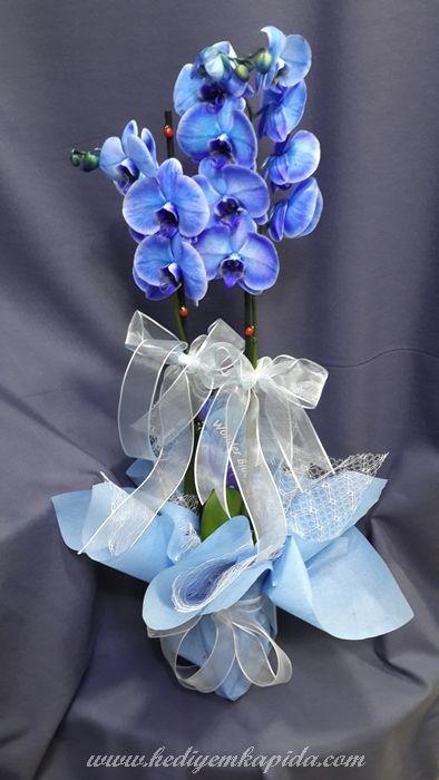 Balıkesi̇r Çiçek - Çiçekler Online - Çiçek Gönder ~ Mavi Orkide