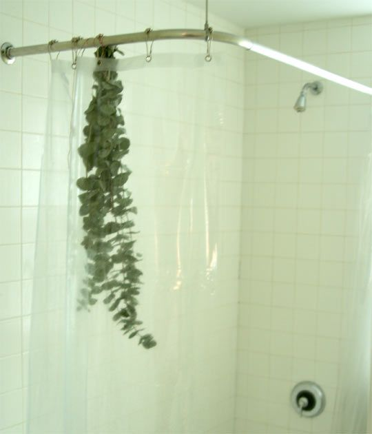 """This is an idea to hang dried eucalyptus in your shower for a """"Spa Like"""" experience, but I'm pinning it here to remind me that I really want to hang growing plants in the shower area. Perhaps a variety of succulents and high-humidity plants would work nicely."""