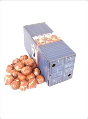Stuur Hollandse tulpen wereldwijd in deze prachtige container! Origineel relatiegeschenk.