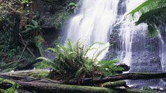 Lorne - Won Wondah & Henersen Falls