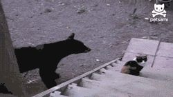 Go Away Bear, I'm A Cat