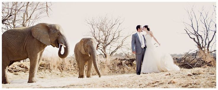 Askari Lodge.  Potential venue.  Not far from Jhb, photo's with elephants, accommodation for all, game drives etc