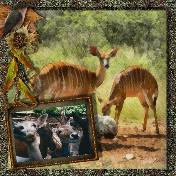 CT page for Whispers of Africa, available at Berry Applicious and Scrappin naturally