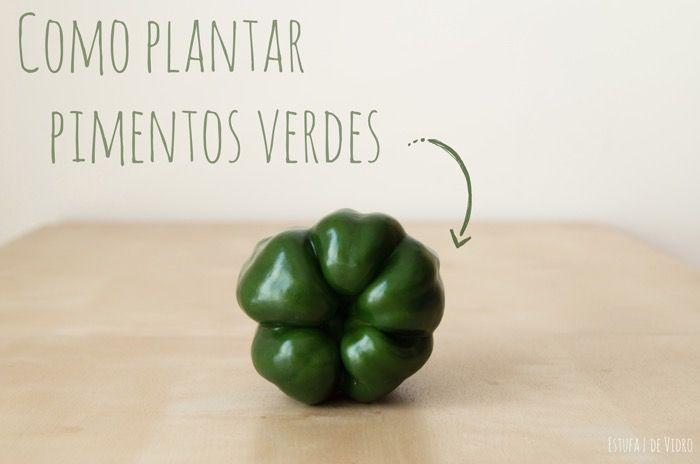 Verdes, vermelhos, amarelos ou laranjas! Quem não gosta de um bom pimento? Vejam como plantar pimentão em casa, mesmo que seja numa varanda!