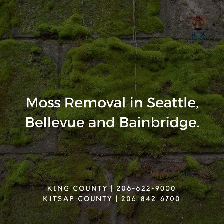 We have literally seen it eat holes through composition roofs! It is amazing how much better your property will look, how much longer your roof, siding, patio or driveway will last, and how much better you will feel once GutterSuckers® has cleaned and removed your Moss!