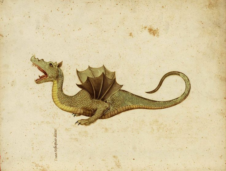 Detail of a watercolour painting of a dragon, from a manuscript compiled under the direction of Ulisse Aldrovandi.