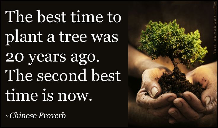 Image result for The best time to plant a tree was 20 years ago. The second best time is now.