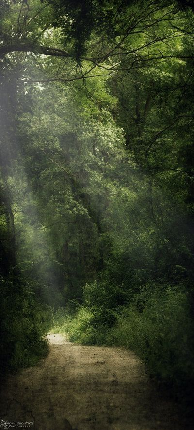 Fue un lugar perdido en un bosque magico.