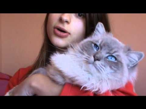 Youtube Cat Dating Video Introduction Clips And Fasteners