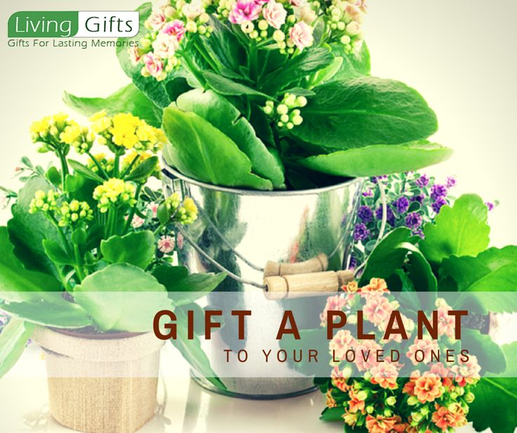 Living Gifts Is The Largest Online Nursery Thus You Can Bonsai Plants And Get