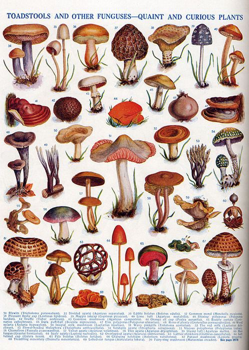 Mushroom art for the kitchen Toadstools and other fungi