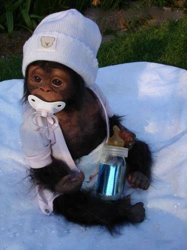 the cutest baby monkey picture - ever. She reminds me of someone...hmmmm