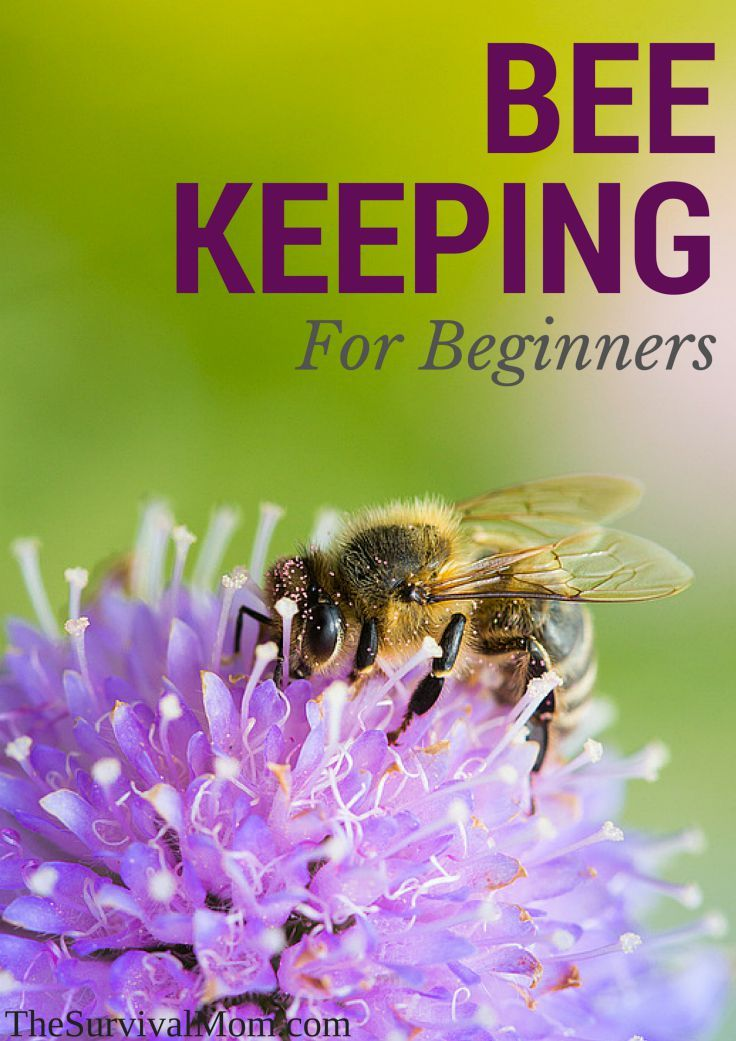 Not every new beekeeper has an easy go of it at first. Read this beginner's experiences.