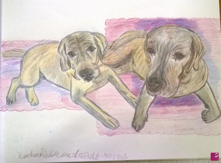 adoro i cani labrador di Barby77
