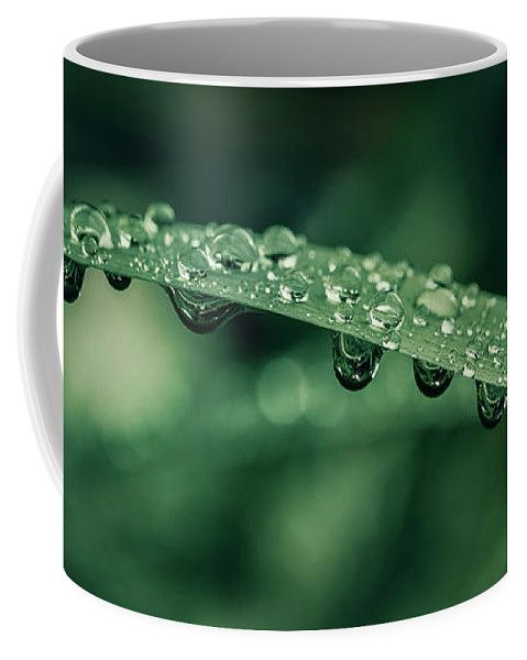 Grass Coffee Mug featuring the photograph Waterdrops by Oksana Ariskina on @pixels and @fineartamerica  Buy print and other product with my fine art photography online: www.oksana-ariskina.pixels.com   #OksanaAriskina  #FineArtPhotography #HomeDecor #FineArtPrint #PrintsForSale #Grass #Plant #Green #Spring #Summer #Drop #Tears #Teardrops #macro #Closeup