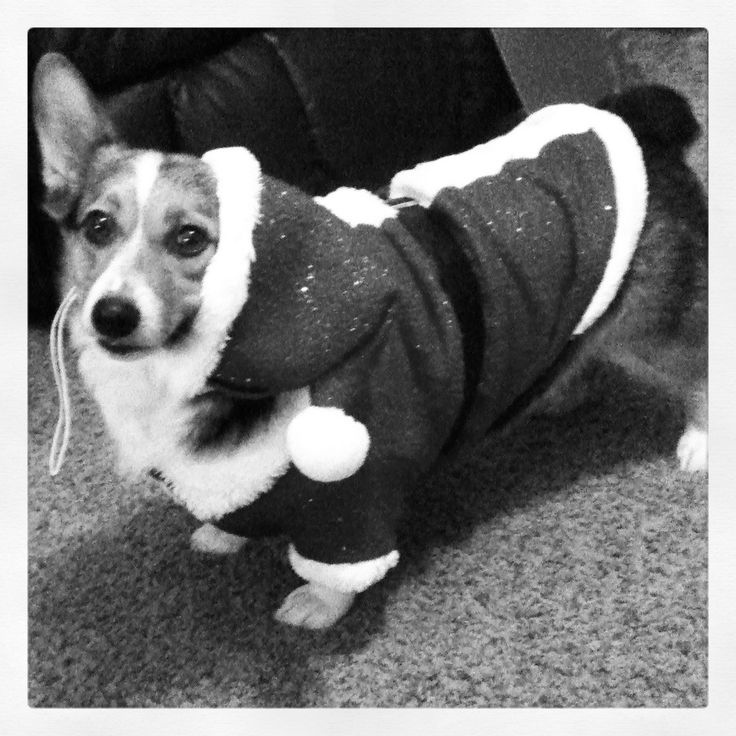 My Maggie being all festive! Cute puppies, dog,