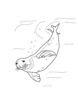 Monk Seal Swimming Underwater Coloring Page Heart Smiles